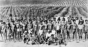 Kanaka (Pacific Island worker) - Kanaka labourers on a Queensland sugar plantation, 1890s; photographer unknown