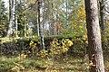 Norns bruk - Kyrkogården 110925 (1).JPG