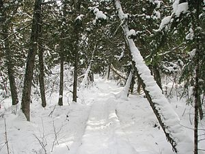 English: North Country Trail - Wisconsin, Brul...