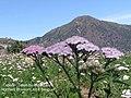 Northern Blossom 05.jpg