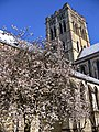 Norwich St John the Baptist Cathedral - panoramio (2).jpg