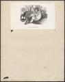 Nycticebus tardigradus - 1851-1876 - Print - Iconographia Zoologica - Special Collections University of Amsterdam - UBA01 IZ19700112.tif