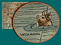 Olaus, Vacca Marina.jpg