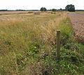 Old Runway at Goxhill Airfield - geograph.org.uk - 922115.jpg