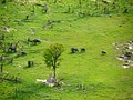 Olifanten in de Okovango Delta (6558971119).jpg