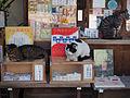 Omikuji cats (14208782051).jpg