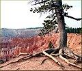On the Edge, Bryce Canyon National Park 9-2009 (5877901660).jpg