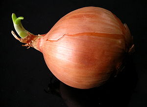 English: onion