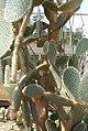 Opuntia pilifera 0zz.jpg