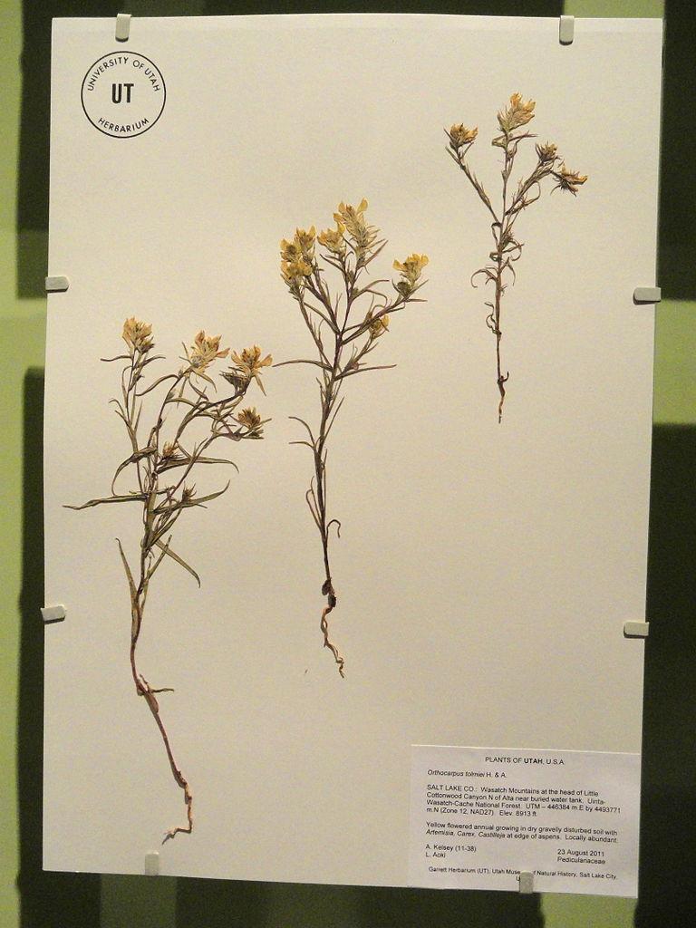 herbarium file how to prepare