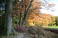 Our favorite walking path with lovely sitting bench for resting and looking over the fields of Hoge Erf Schaarsbergen with nice autumncoloured American Oak trees - panoramio.jpg