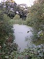 Overgrown Green Pond just off the Sandstone Way - geograph.org.uk - 533045.jpg