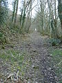 Overgrown trackbed of the old incline, West Somerset Mineral Railway.jpg