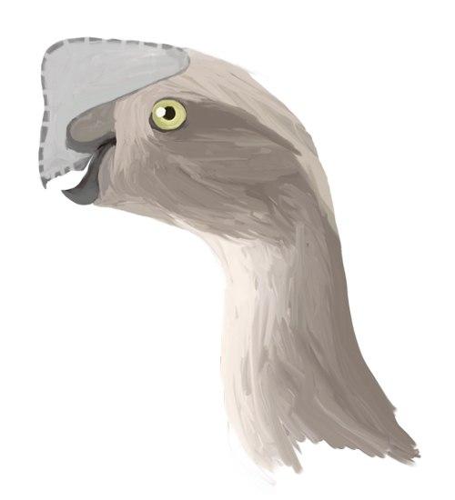 Oviraptor digital1