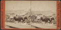 Oxen on dock, from Robert N. Dennis collection of stereoscopic views.png