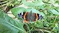 P1070349 Butterfly.jpg