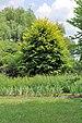 PL-PK Bolestraszyce, arboretum 2011-06-16--12-44-47-047.jpg