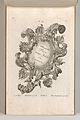 Page from Album of Ornament Prints from the Fund of Martin Engelbrecht MET DP703575.jpg