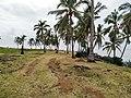 Palm trees near Mitsamiouli beach 3.jpg