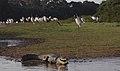 Pantanal JF4.jpg