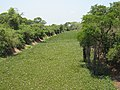 Pantanal verde.jpg