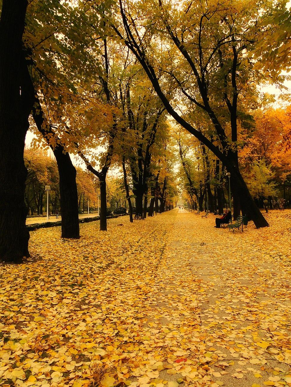 Parcul Carol - toamna