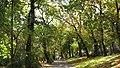Parcul Central (3041108868).jpg