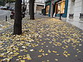 Paris 75018 Avenue Junot sidewalk autumn leaves.jpg