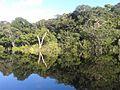 Parque nacional de Anavilhanas época do rio cheio.jpg