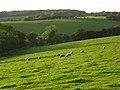 Pasture, Radnage - geograph.org.uk - 1024332.jpg