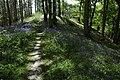 Path through bluebells - geograph.org.uk - 1310217.jpg