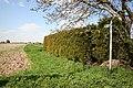 Path to Leverton Highgate - geograph.org.uk - 405989.jpg