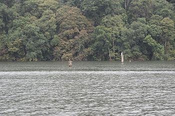 Periyar Tiger Reserve4.jpg