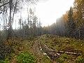 Permskiy r-n, Permskiy kray, Russia - panoramio (780).jpg