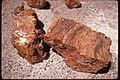 Petrified Wood at Petrified Forest National Park, Arizona (bdcfecbb-d279-414d-b049-e5c22f158212).jpg