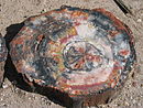 Petrified wood closeup 2.jpg