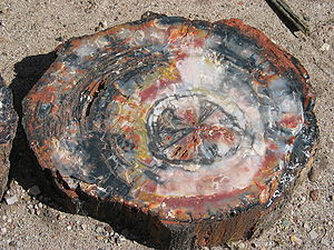 Petrifaction - Petrified wood