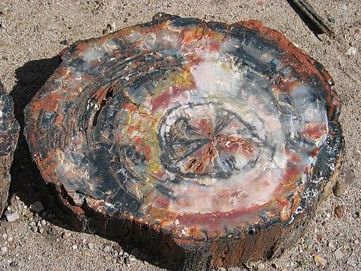 Petrified wood closeup 2