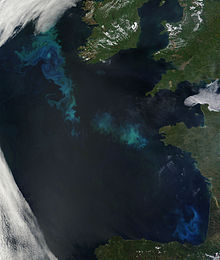 Phytoplankton Bloom in the North Atlantic.jpg