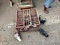 Pigeons at Jatinegara Market.jpg