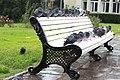 Pigeons under the rain.jpg