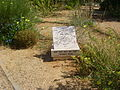 PikiWiki Israel 13840 Rina Smilansky Garden in Rehovot.JPG