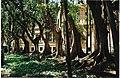 Pinacoteca de São Paulo e jardim.jpg