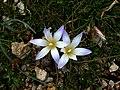Plant Croatia March 02.jpg