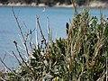 Plante (08).jpg