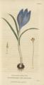 Plate 4 Crocus Vernus - Conversations on Botany-1st edition.tiff