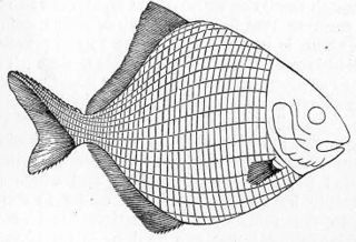 Palaeonisciformes order of fishes