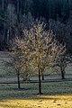 Poertschach Gaisrueckenstrasse Am Kåte Nussbaum 10032017 4870.jpg