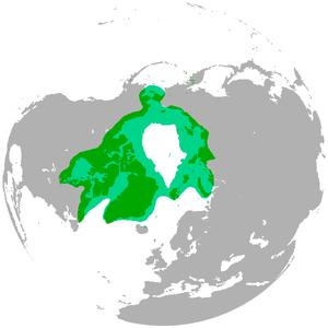 Circumpolar distribution - The range of the polar bear encircles the North Pole.