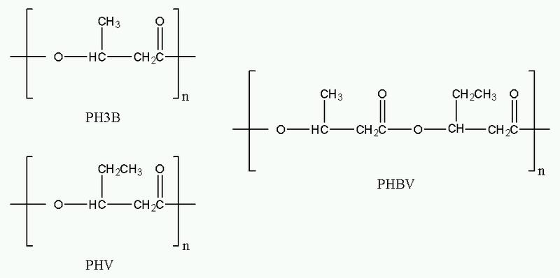 File:Polyhydroxyalkanoates.png